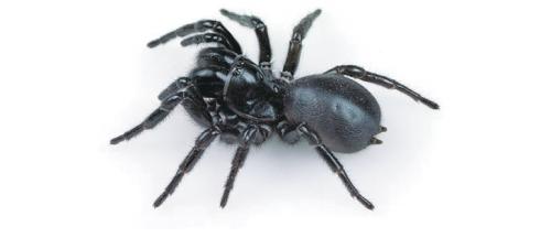 77-spider_venom