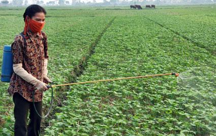 Vietnam over use of pesticides
