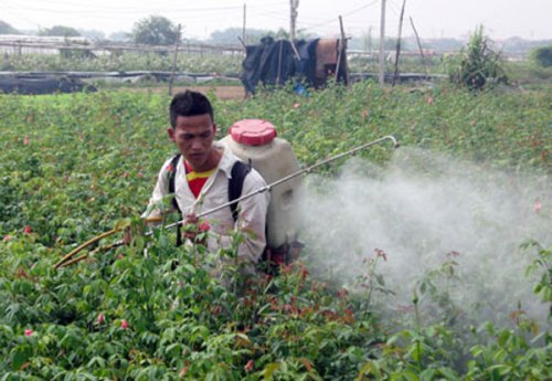 vietnam-farmer-pesticides