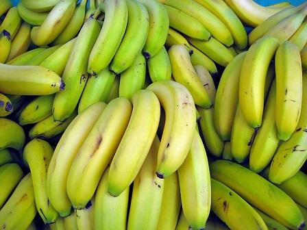 Banana Panama disease 2