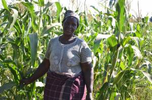 mozambican-smallholder-farmer-who-has-tried-hybrid-maize-on-her-plot_1000x666