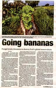Banana 2256