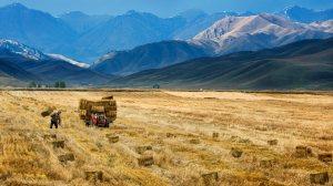 china-harvest