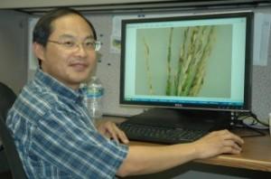 Zhou organic rice