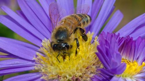 sn-honeybees