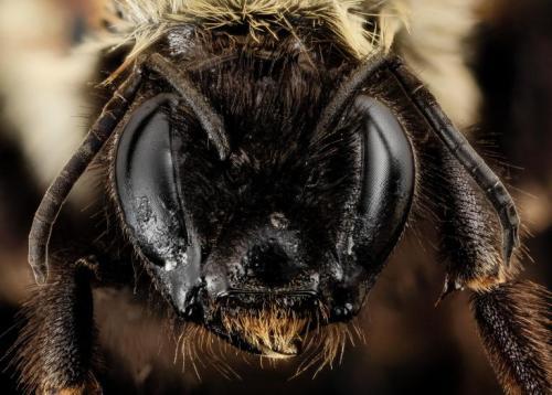bumble-bee-2