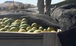 tarping_citrus_truck-e1483689646333