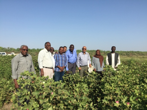 AAIS scientists in cotton MG_4020