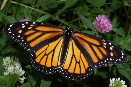 female monarch 768870-3x2-700x467