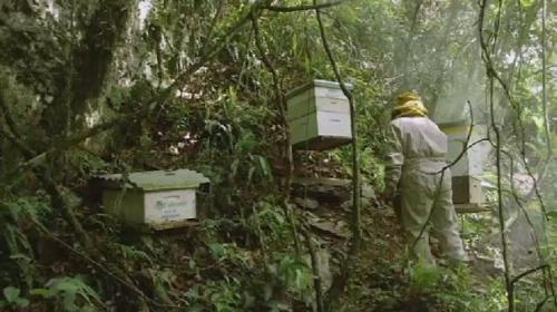 bolivia bees