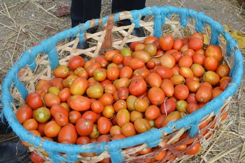 tomatoes zara shortt ethiopia