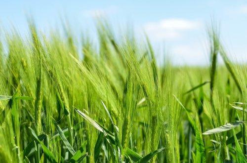 2-crops