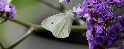 butterfly-banner2-x.png