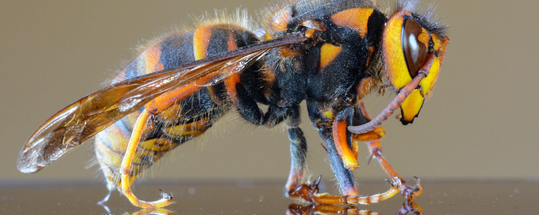 wasp-banner-x